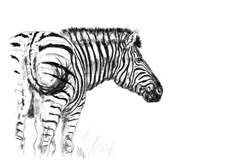 """zebra#2"" - original charcoal sketch"