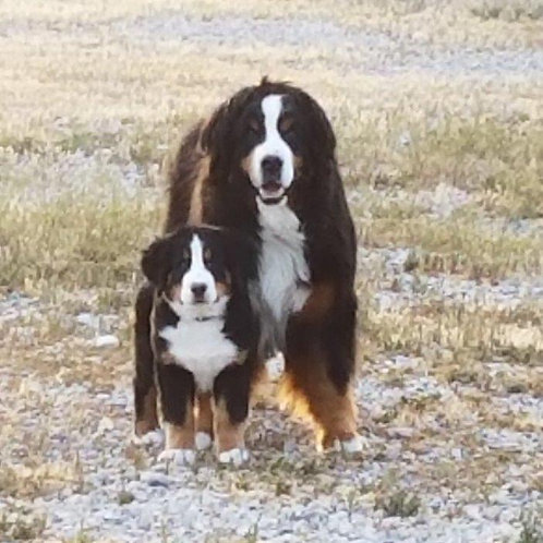 Bridger & Rumble Photo - Yellowstone Wildlife Cabins Mascots