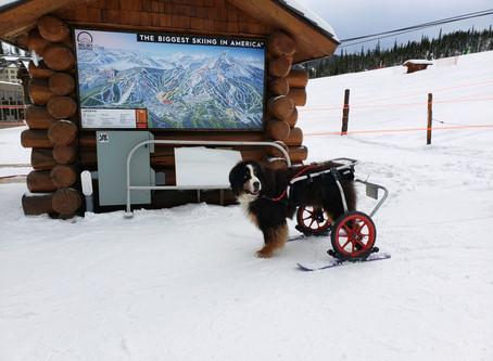Bridger At Big Sky Resort in Montana