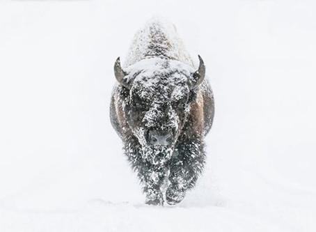 Winter Photo Expo, Yellowstone National Park