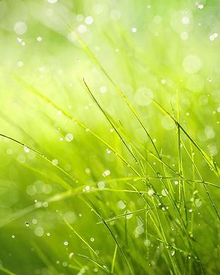 grass website pic copy.jpg