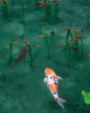koi fish pondsora-sagano-103742-unsplash