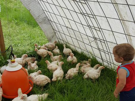 Morris Hill Farm:  Coming Soon!