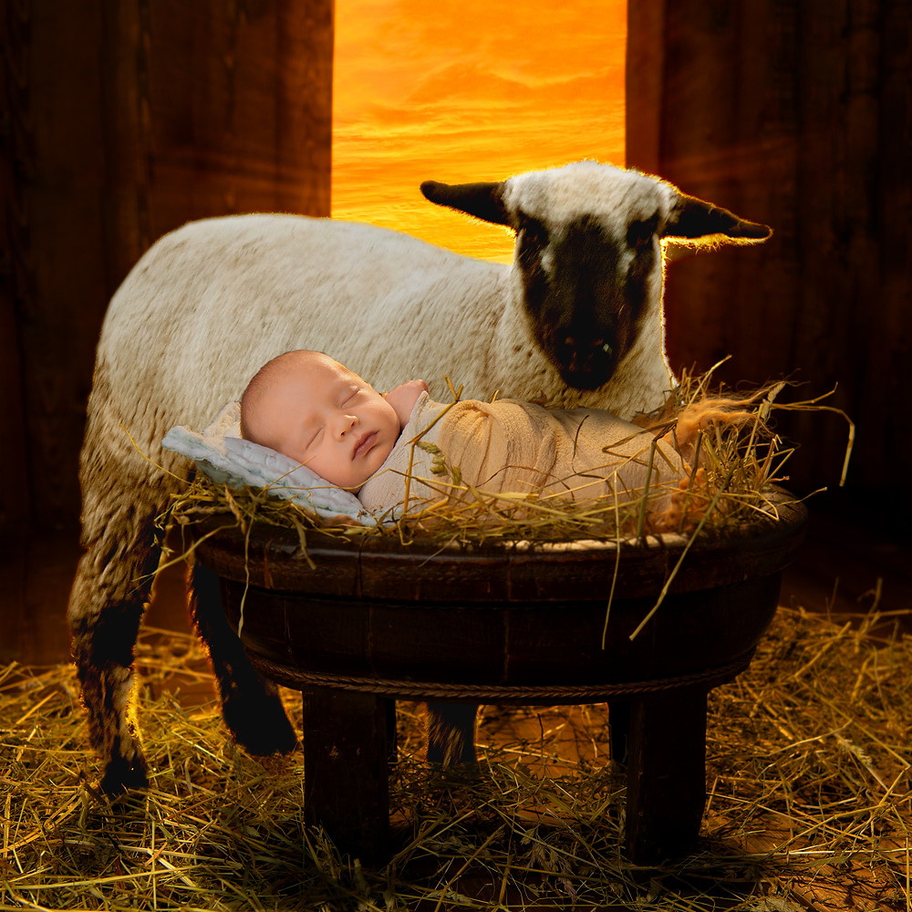 A sheep by a manger with a baby.