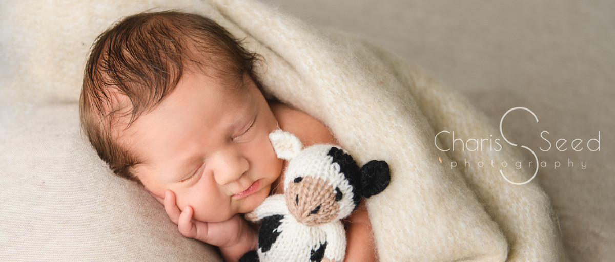 newborn holding cow