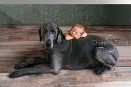 Dog Composite.jpg