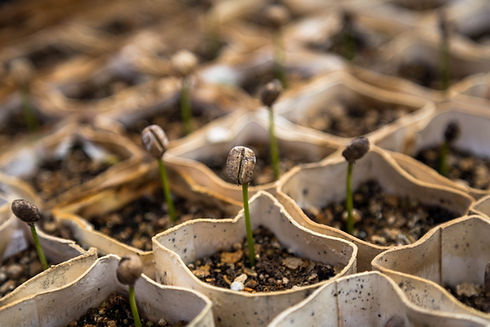 a seed out of the ground