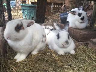 New Home For The Bunnies