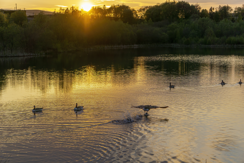 garn lakes geese.JPG