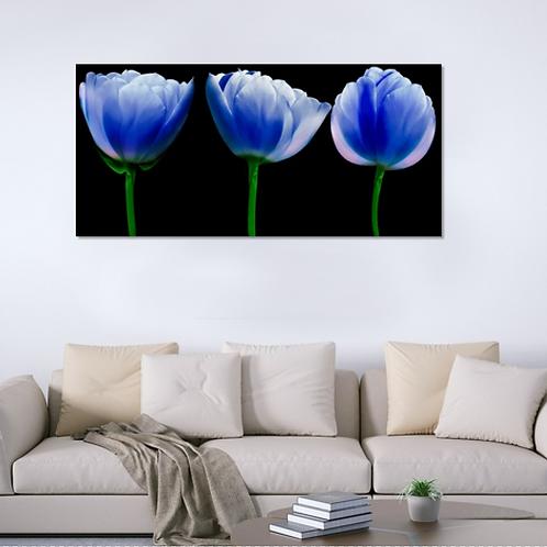 Tulipanes azul y negro