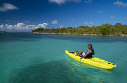 Compass_action_Antigua_seagrass_wide_cle