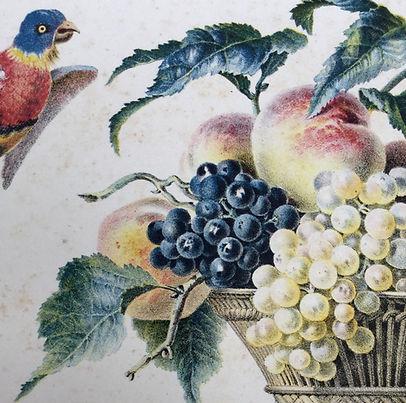'Panier de fruits' Michael Twyman on Godefroy Engelmann's Album chromolithographique