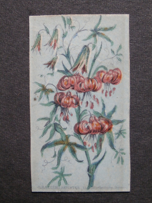 Queen's Floral Needle Box Set - Baxter Print