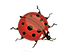 Lady Bug png..png