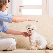 comment_pratiquer_le_reiki_pour_chiens_1