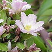 rosacactus.jpg