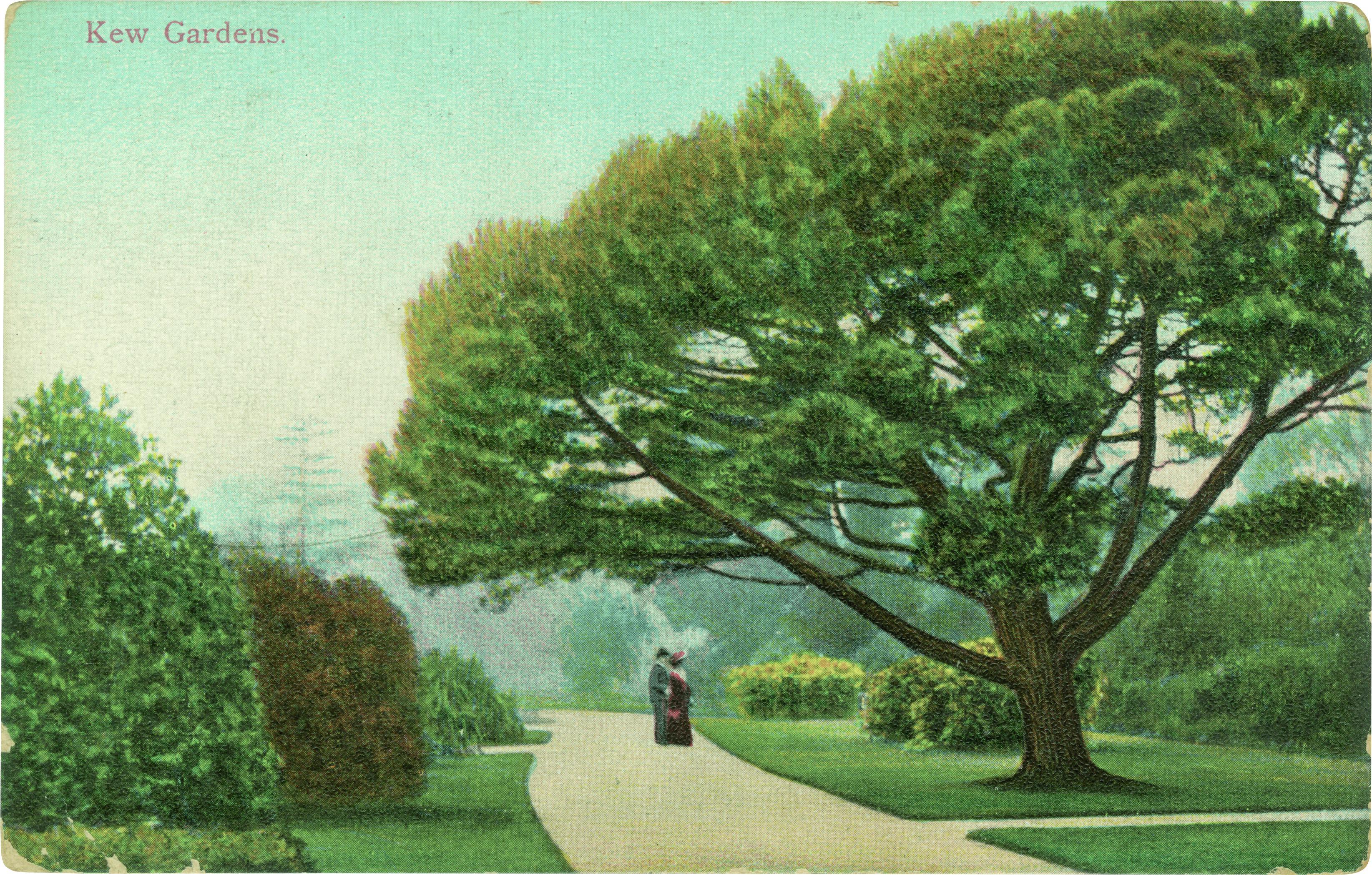 Stone Pine.jpg