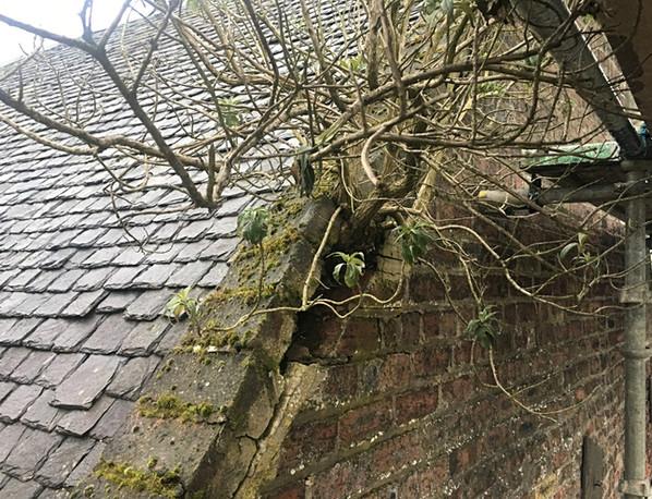 vegetation-removal-masonry-falkirk-1.jpg