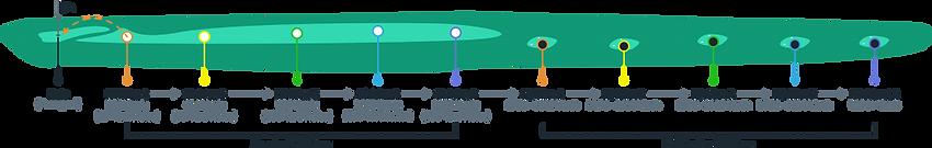 divisions-diagram-e1568942160865_ff11ace