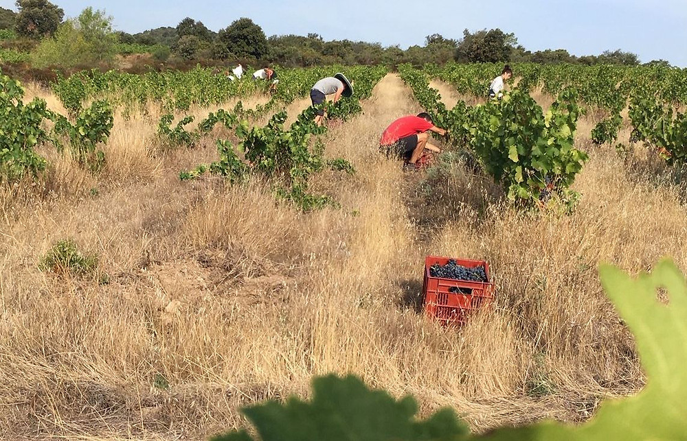 vignes-venadanges-vins-natures.jpeg