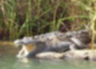 SafarisPage-imain.jpg