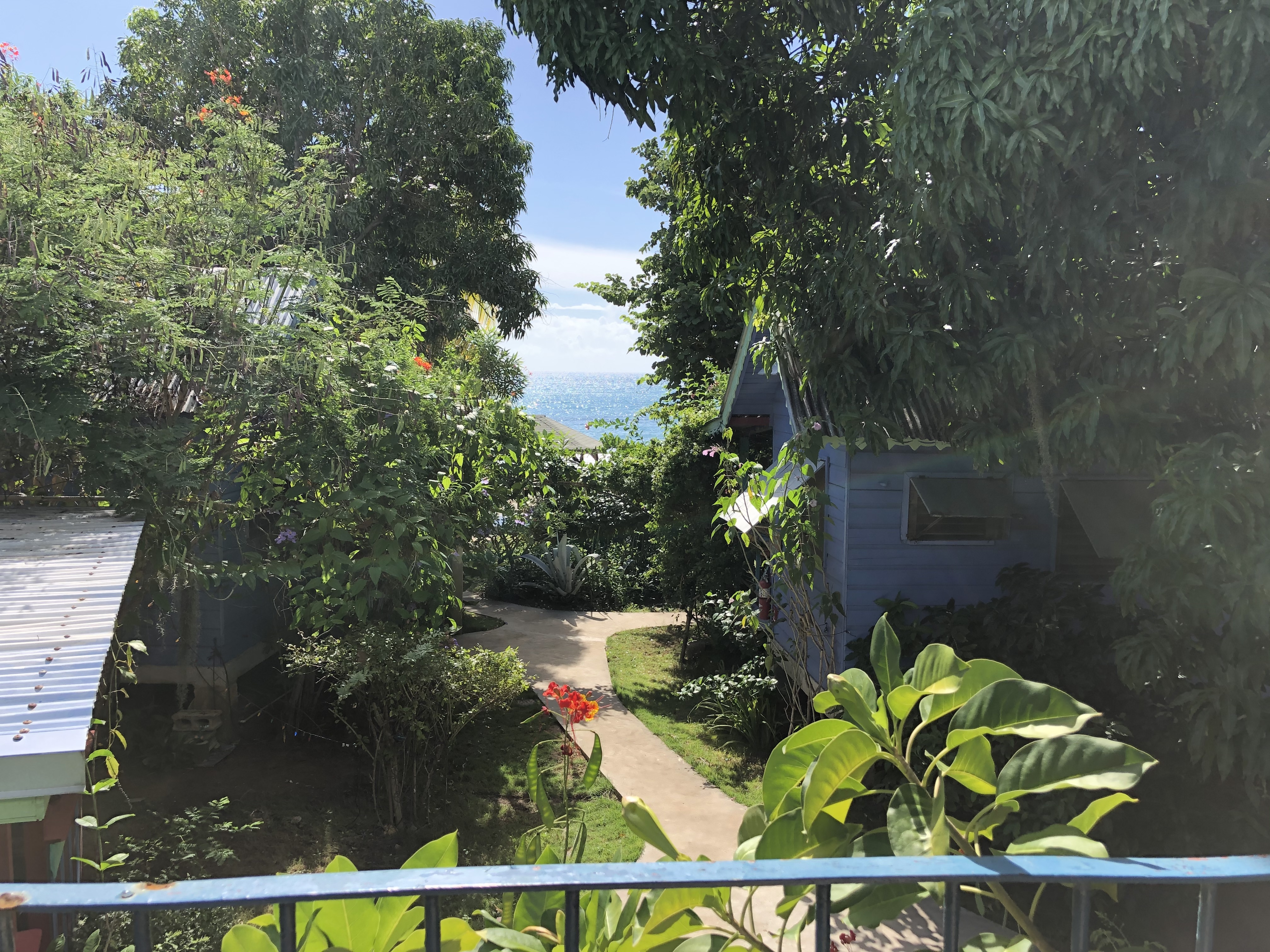 backyard & gardens