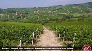 Monforte | Vigneto San Giovanni | Barolo