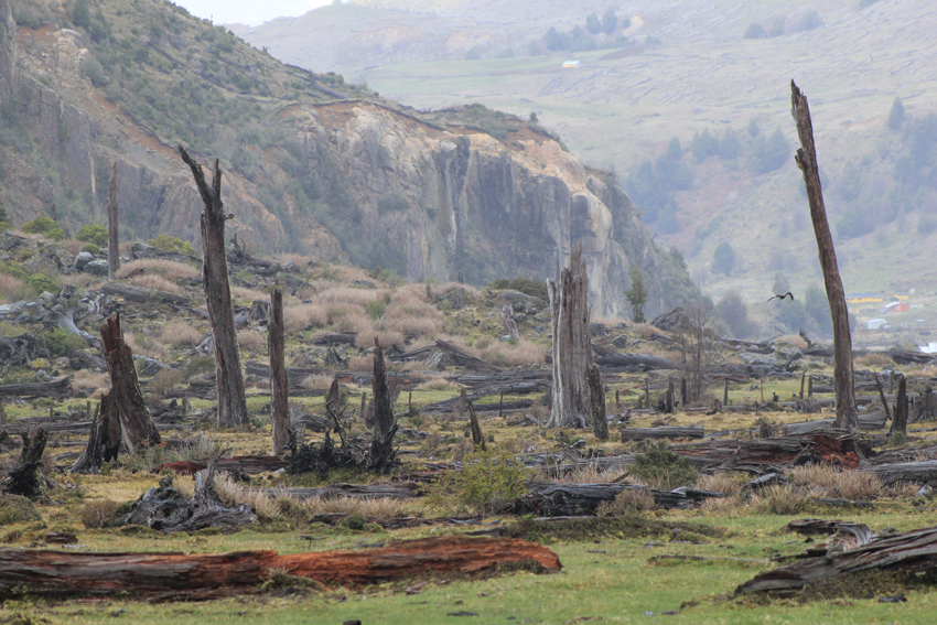 Bosque quemado. Río Claro 2014