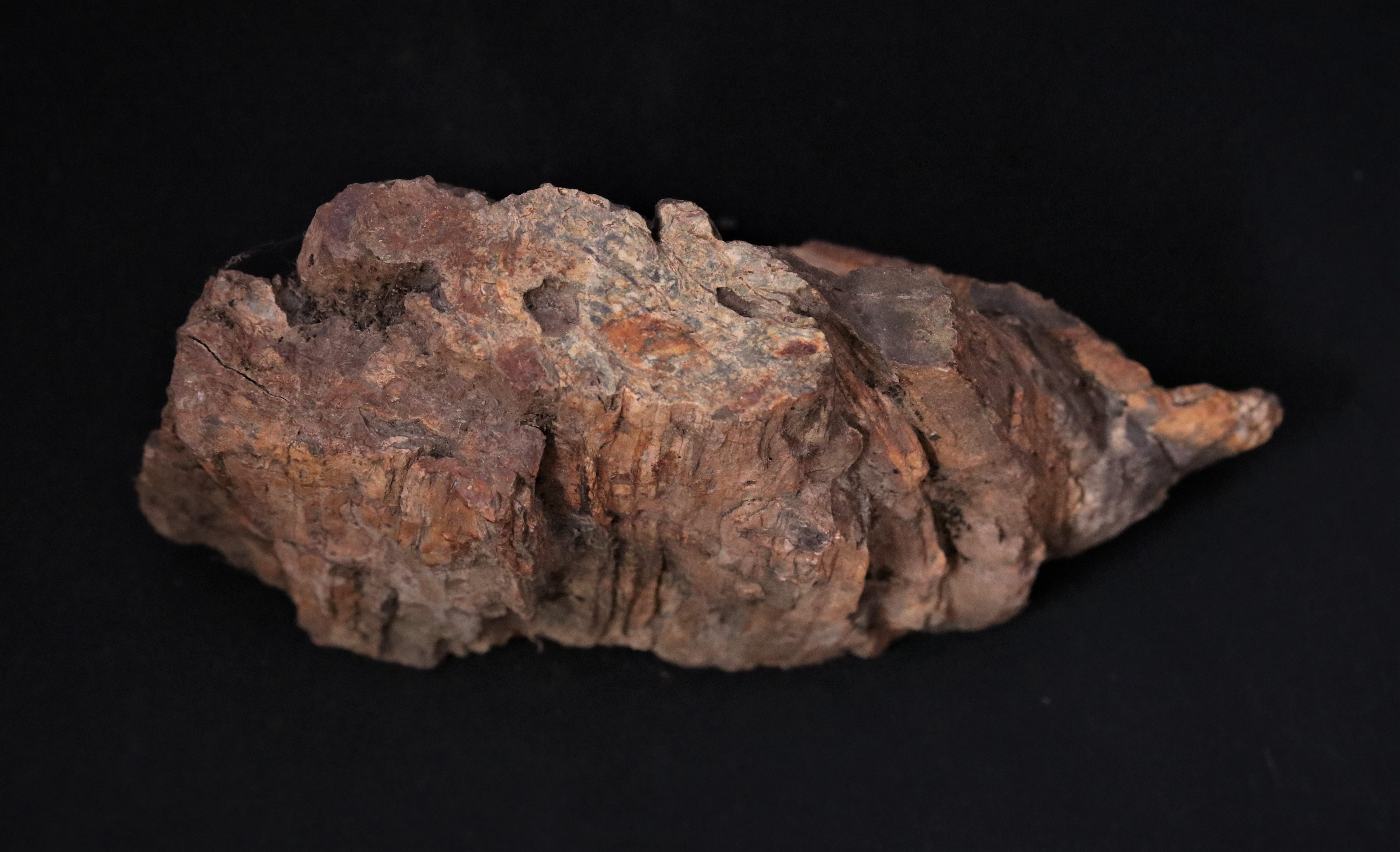 Madera fósil