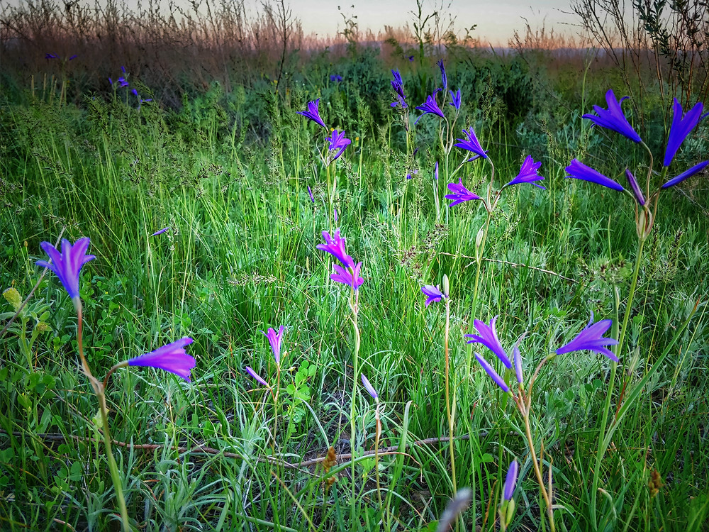 Wild flowers and wormwood in the steppe.