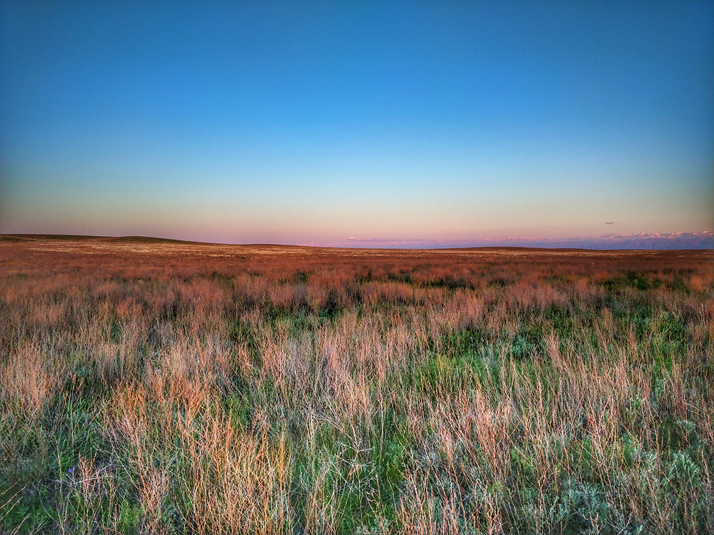 The steppe.