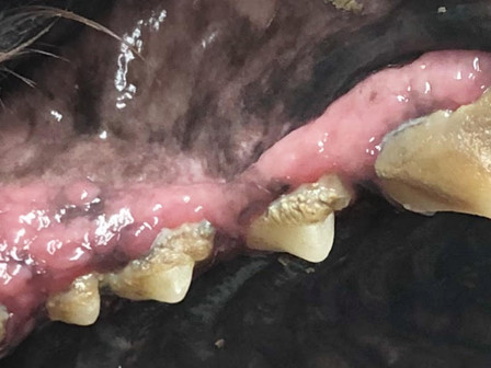 למה הפה מסריח – בעיות שיניים וחניכיים