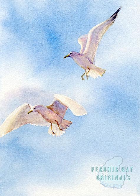 P18 Two Gulls
