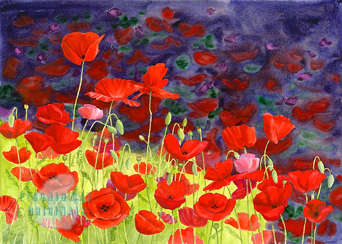 P11 May Poppies