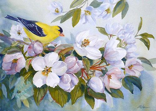 Z69 Goldfinch