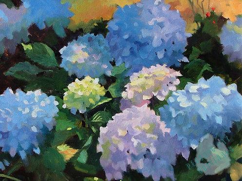 O02 Hydrangeas in Bloom