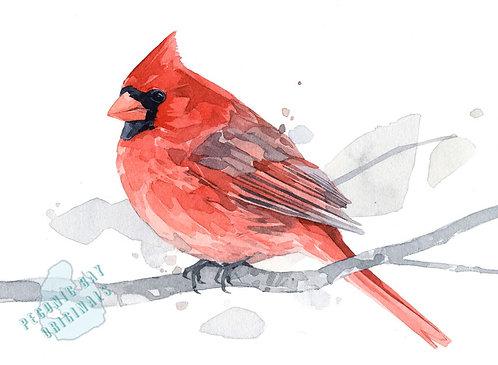 H21 Male Cardinal