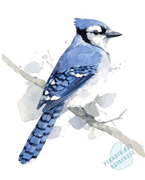H32 Blue Jay