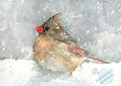 H14 Cardinal in Winter