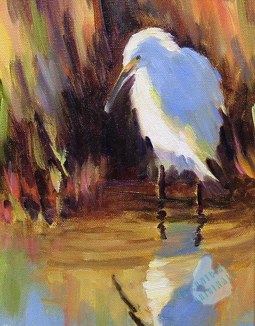 O12 Snowy Egret