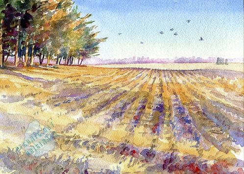 I72 Autumn Field