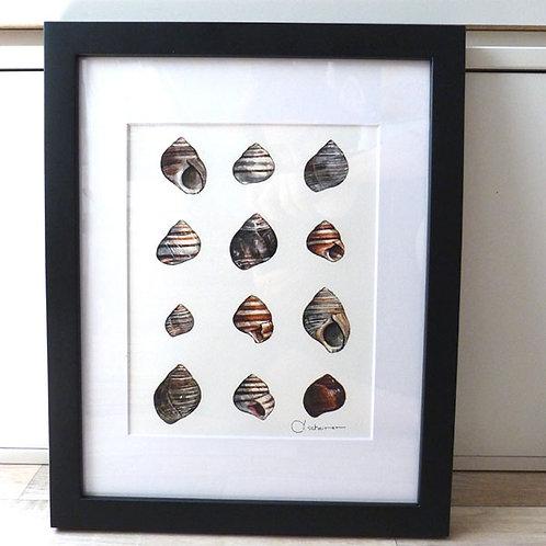Periwinkles, 11x14 framed
