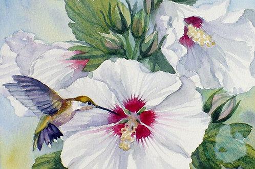 Z16 Hummingbird and Hibiscus