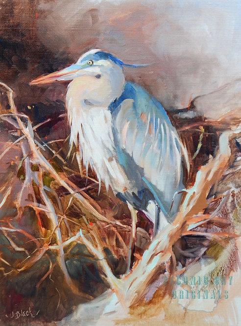 O34 Blue Heron