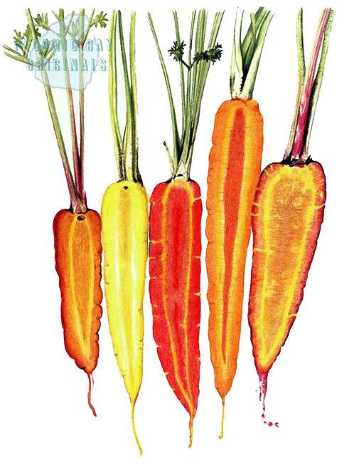V11 Sliced Carrots