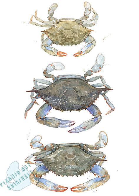 H02 Crab Stack