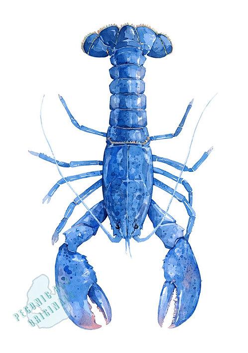 H24 Cobalt Blue Lobster