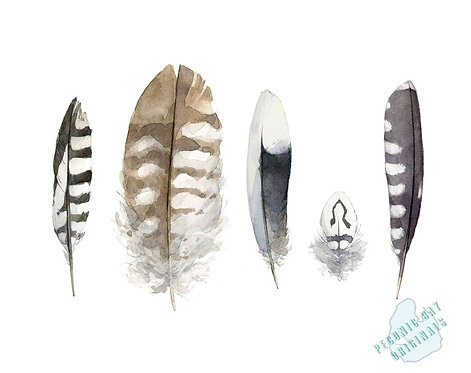 H11 Striped Feathers
