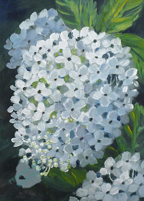 Z14 Hydrangea Blossom