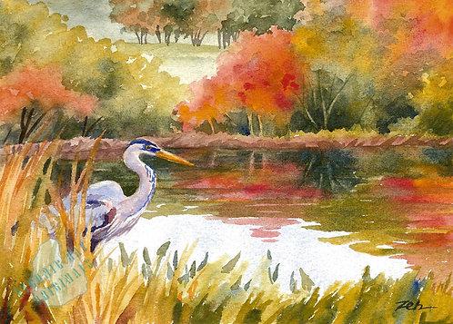 Z68 Autumn Heron